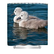 Baby Swans Shower Curtain