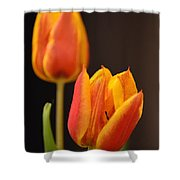 Baby Tulips Close Up Macro Shower Curtain