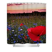 Bachelor Buttons And Poppies Shower Curtain