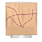 Bacillus Anthracis Shower Curtain
