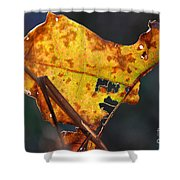 Back-lit Golden Leaf Shower Curtain