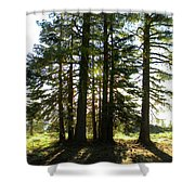 Back Lit Trees Shower Curtain