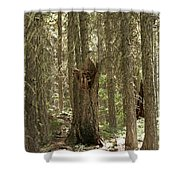 Back To Nature Shower Curtain