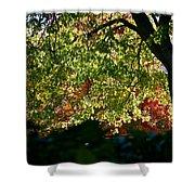 Backlit Autumn Shower Curtain