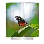 Backlit Butterfly Shower Curtain