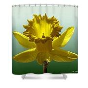Backlit Daffodil Shower Curtain