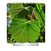 Backlit Leaves Shower Curtain
