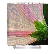 Backlit Mallow Shower Curtain