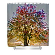 Backlit Maple In Autumn's Light Shower Curtain