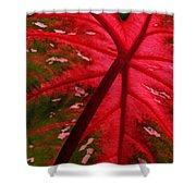 Backlit Red Leaf Shower Curtain