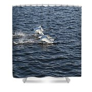Backlit Swans Shower Curtain