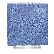 Bacteria Lm Shower Curtain