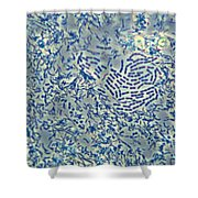 Bacteria, Phase Contrast Shower Curtain