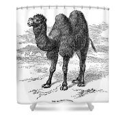 Bactrian Camel Shower Curtain