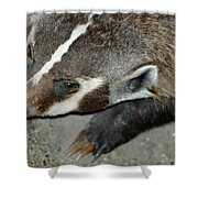 Badger On The Loose Shower Curtain