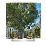 Balboa Tree Shower Curtain