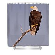 Bald Eagle - Pride Of America Shower Curtain