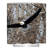 Bald Eagle At Full Wingspan Shower Curtain