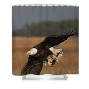 Bald Eagle Catches Fish Shower Curtain