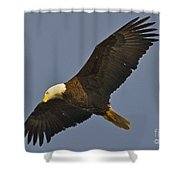 Bald Eagle Fly Over Shower Curtain