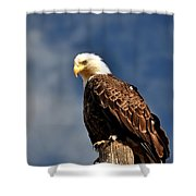 Bald Eagle Homer Alaska Shower Curtain