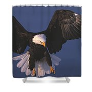Bald Eagle Hovering In The Air Shower Curtain