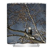 Bald Eagle In A Tree Shower Curtain