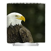 Bald Eagle In Ecomuseum Zoo Shower Curtain