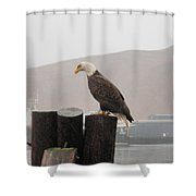 Bald Eagle On Piling Shower Curtain