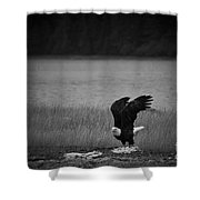 Bald Eagle Take Off Series 3 Of 8 Shower Curtain