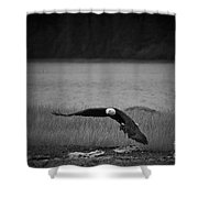Bald Eagle Take Off Series 4 Of 8 Shower Curtain