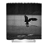 Bald Eagle Take Off Series 6 Of 8 Shower Curtain