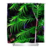 Baldcypress Shower Curtain