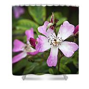 Ballerina Shrub Rose 3303 Shower Curtain
