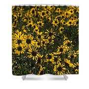Balsamroot Field In Grand Teton Shower Curtain