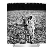 Bambi In Black And White Shower Curtain