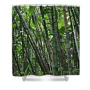 Bamboo 2 Shower Curtain