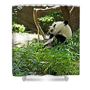 Bamboo Is Tasty Shower Curtain