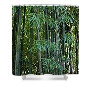 Bamboo Tree Shower Curtain by Athena Mckinzie