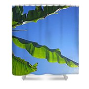 Banana Leaf In The Sky Shower Curtain