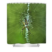 Banana Spider With Web Shower Curtain