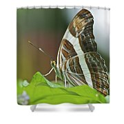 Band-celled Sister 2921 Shower Curtain