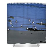 Band Of Seagulls Shower Curtain