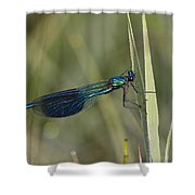 Banded Demoiselle Calopteryx Splendens Shower Curtain by Konrad Wothe
