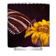 Banded Orange Heliconian Dryadula Phaetusa Shower Curtain