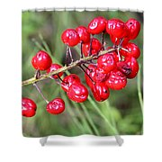 Baneberry Shower Curtain
