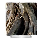 Banyan Shower Curtain