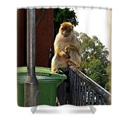 Barbary Ape Shower Curtain