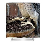 Barbary Falcon Feet Shower Curtain