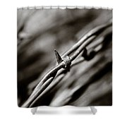 Barbbed Wire 1 Shower Curtain